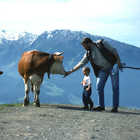 Cow and Farmer, Berner Oberland, Switzerland